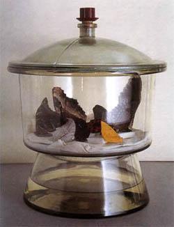 Как правильно распрваить крылья бабочки