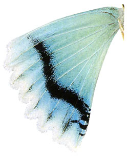 чешуйки - видоизменённые волоски